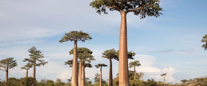 Comment obtenir un visa long séjour pour Madagascar?
