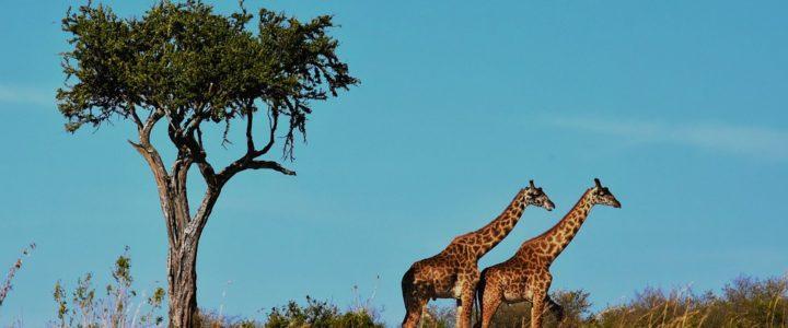 Quelques destinations à privilégier le temps d'un voyage en Tanzanie