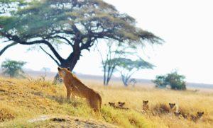 National_Park,_Tanzania