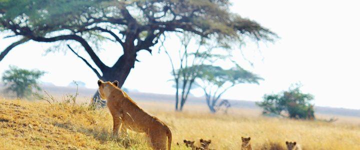Parcs et réserves à découvrir en Tanzanie: 2 sites naturels incontournables
