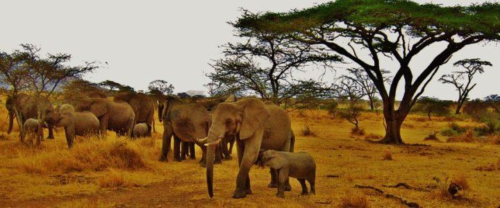 Les lieux d'intérêt à retenir lors d'un voyage en Tanzanie