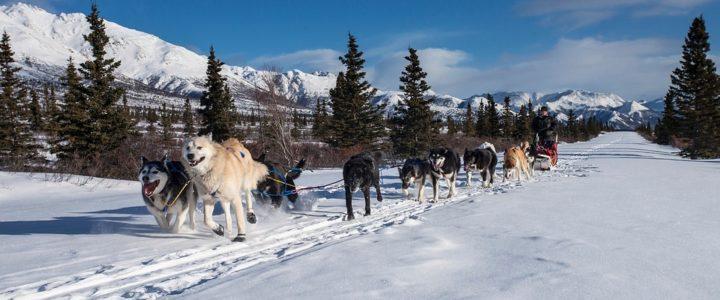 Traîneau à chiens Fjord du Saguenay Québec